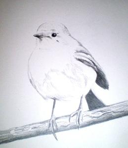 Little Robin Redbreast (pencil drawing)