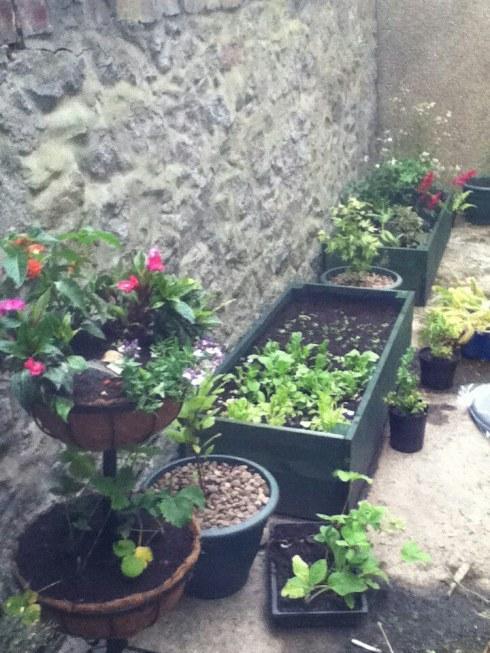 Garden (After 1)