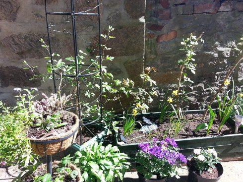 Garden (After 2)