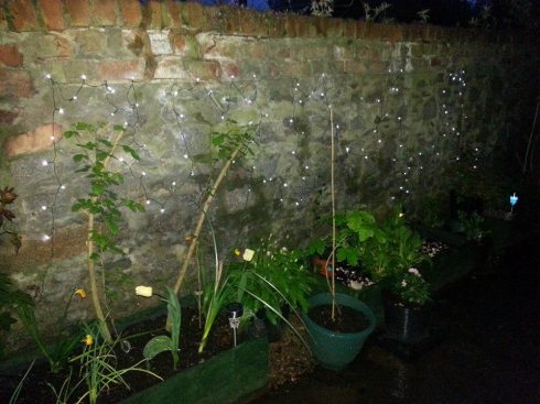 Solar Fairy Lights in Garden